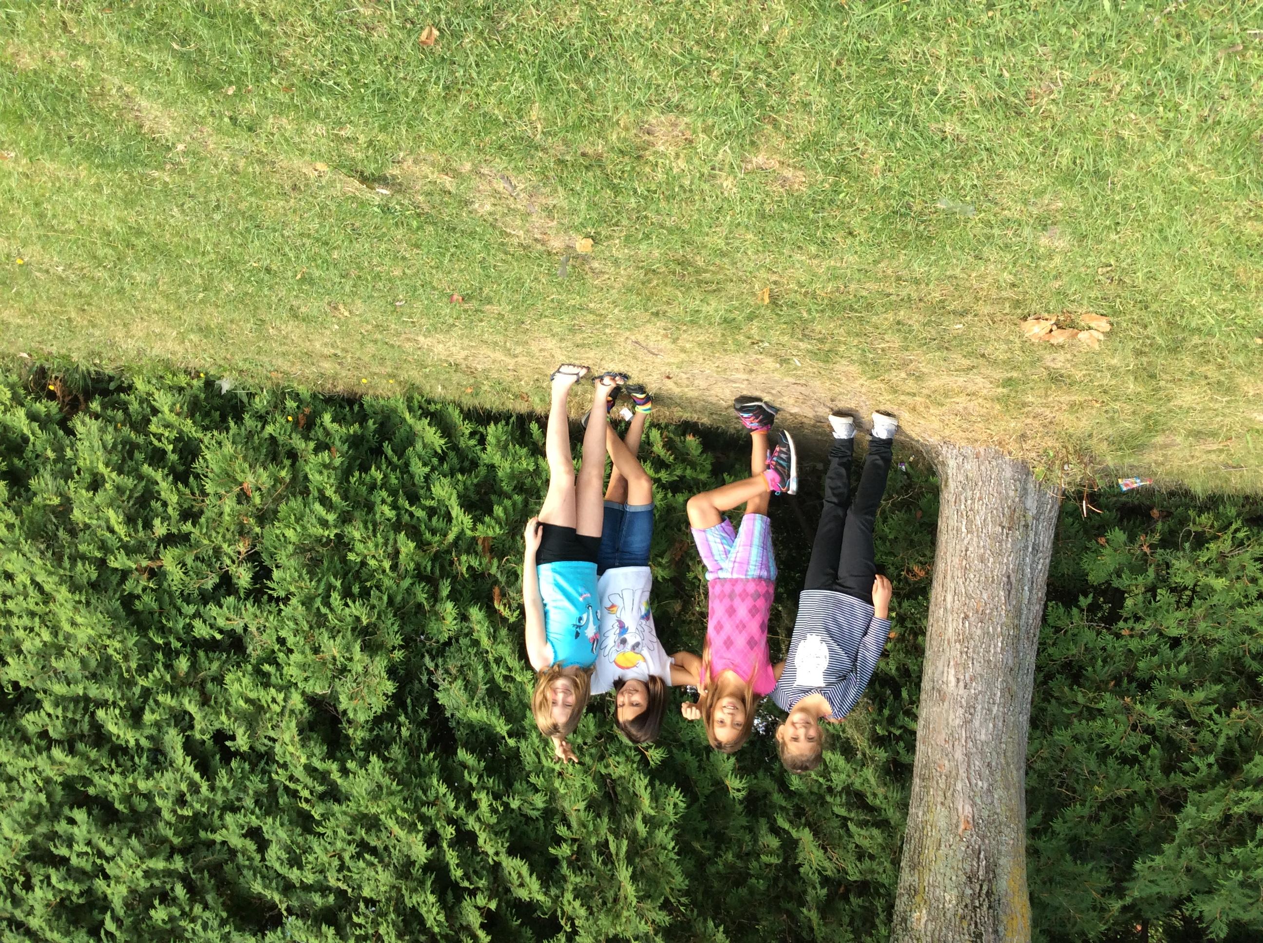L'arbre du club des ninjas-filles